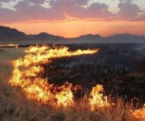 СЭРЭМЖЛҮҮЛЭГ: Баянзүрх дүүрэгт гарсан ойн түймрийг цурманд оруулжээ