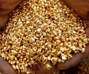 Содон хэлбэртэй алтыг Монголбанк өндөр үнээр худалдан авч байна