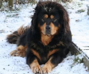 62 настай эр 30 минутын турш аварга нохойтой зодолджээ
