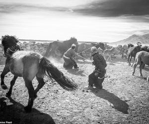 """Монголд авсан гэрэл зураг """"Travel Photographer of the Year""""-ын шилдгээр шалгарлаа"""