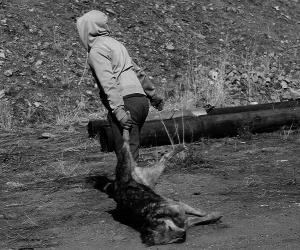 Богдхан уулан дахь 214 нохойг устгажээ