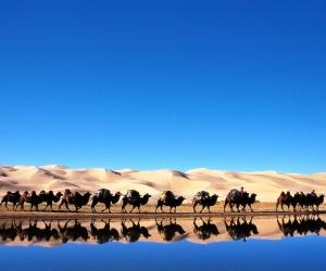 Гадаадынхан Монголыг зорих 16 шалтгаан