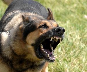 14 настай хүүхэд айлын нохойд хазуулж, гэмтжээ
