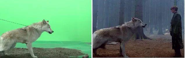 """""""Хаадын тоглоом""""-Бодит байдал, хийсвэр зураглалын ялгааг харуулах гайхалтай зургууд"""