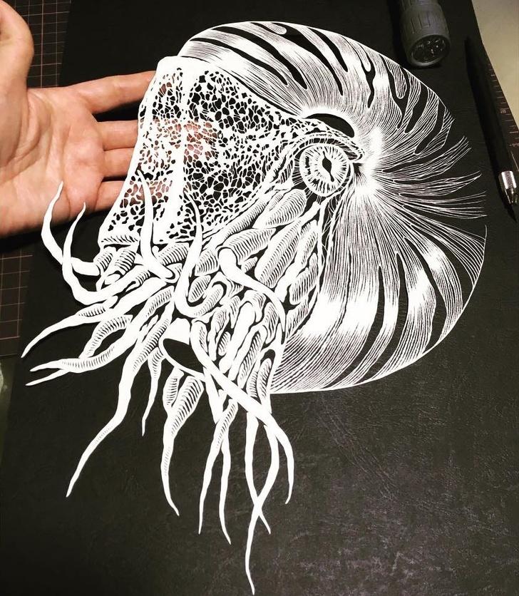 ФОТО: Хараа булаам цаасан цоолбор