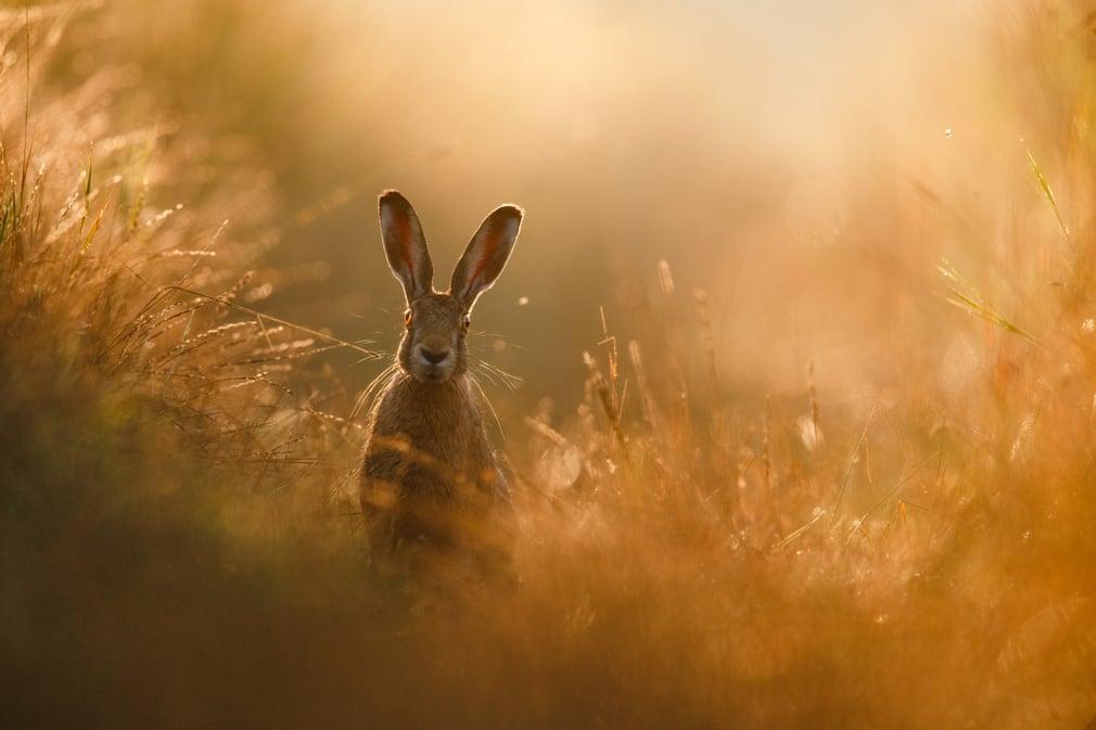ФОТО: Байгалийн гэрэл зургийн нийгэмлэгийн шилдэг бүтээлүүд