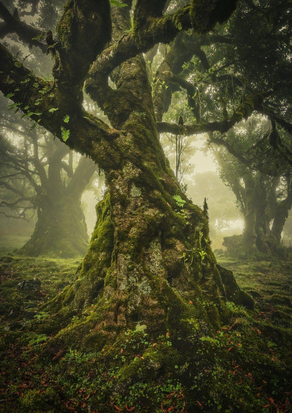ФОТО: Байгалийн сэдэвтэй шилдэг зургууд