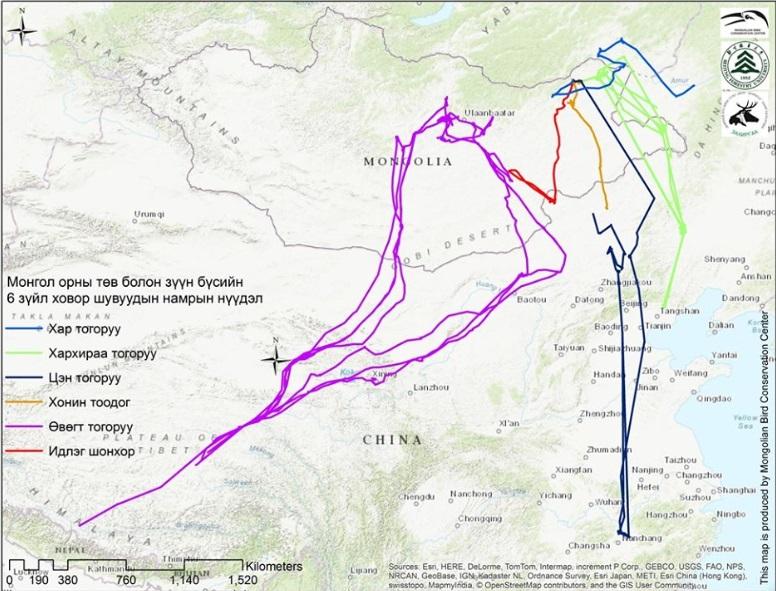 Монголоос ниссэн нүүдлийн шувууд хаа хүрч өвөлждөгийг судалжээ