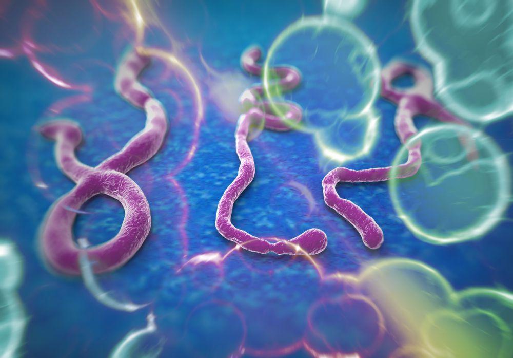 Эрдэмтэд эбола вирусийн талаар шинэ мэдээлэл олж нээжээ