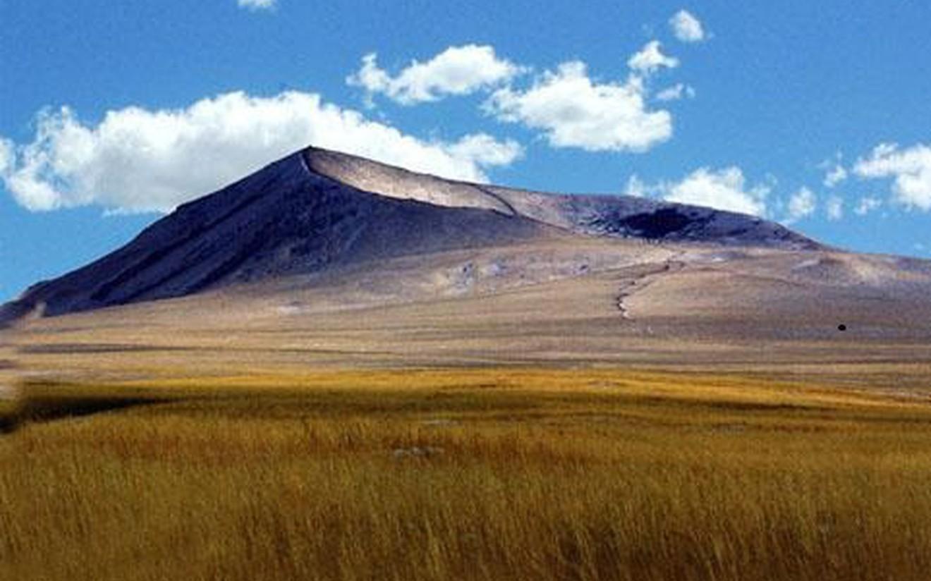 Ч.Дугаржав: Судалгааны дүнгээс үзэхэд Монгол оронд 750 настай хар мод байна