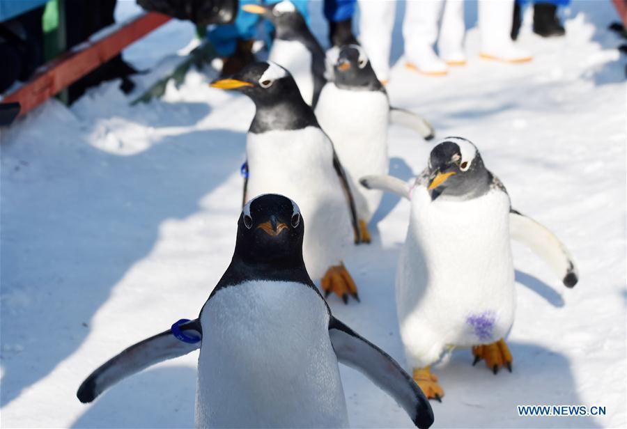 """Амьтны хүрээлэнгийн оцон шувууд """"Мөсөн хотхон""""-д зочлов"""