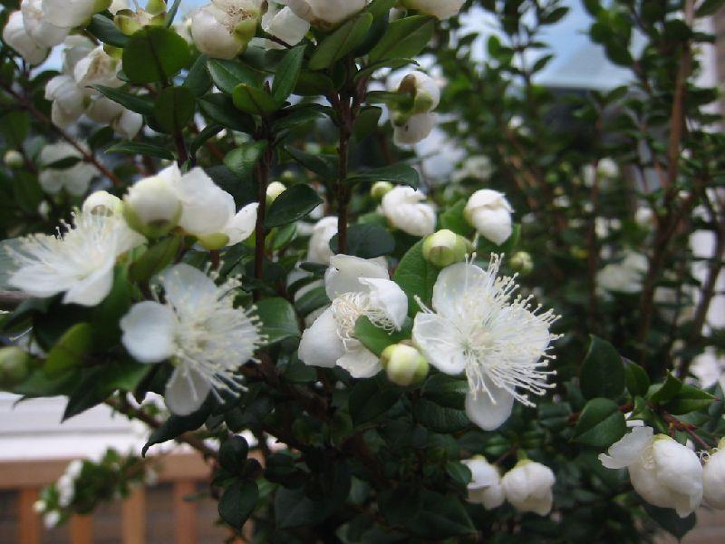 ЗӨВЛӨГӨӨ: Гэрт тань аз жаргал авчрах цэцэгс