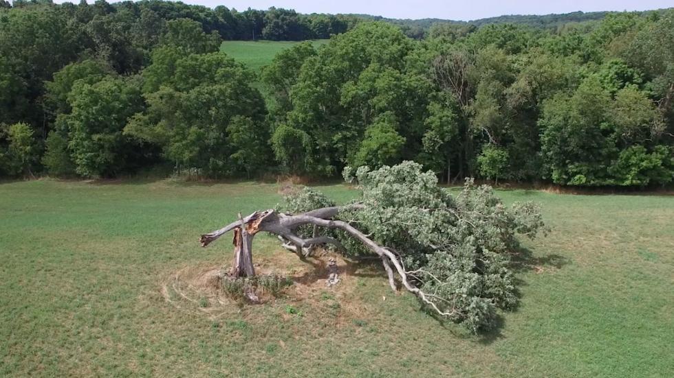 """shawshank-oak-tree-1.jpg_optimal """"Шоушенкийн шоронгоос оргосон нь"""" киноны царс модоор бэлэг дурсгал урлажээ"""