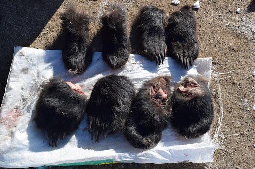 Хууль бусаар ан амьтан агнасан иргэнийг 5.4-40 сая төгрөгөөр торгож, 1-8 жил хорих ял шийтгэнэ